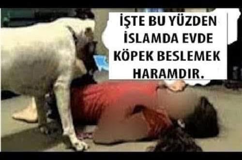 İşte bu yüzden islam' da evde Köpek Beslemek Haram. Bakın Hayvanı Hangi Amaçla Evde Besliyor!!